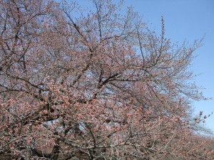 小金井公園たてもの園前左